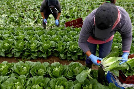la-pandemia-de-covid-19-empeoraria-la-desigualdad-por-impacto-desproporcionado-en-los-trabajadores-poco-calificados